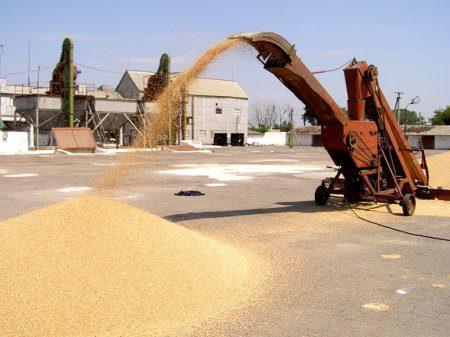 Татарстан вошел в число регионов РФ с наибольшим производством зерна