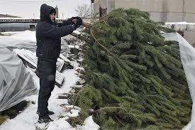Где в Казани можно сдать елку
