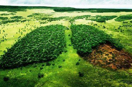 В Татарстане будут реализовывать экологические проекты