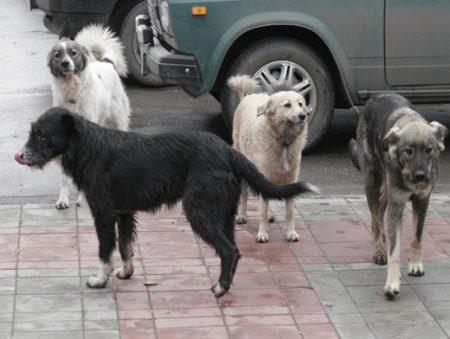 В Казани решают вопросы с бездомными собаками