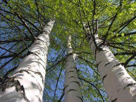 Студенты из Нижнекамска вышли сажать деревья