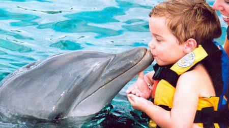 В дельфинарии Набережных Челнов пополнение
