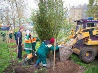 Подготовка города к «Зеленому рекорду»
