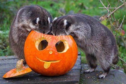 Отмена Хэллоуина